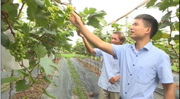 Hợp tác xã sản xuất và tiêu thụ rau an toàn Phương Đình - Ảnh 1